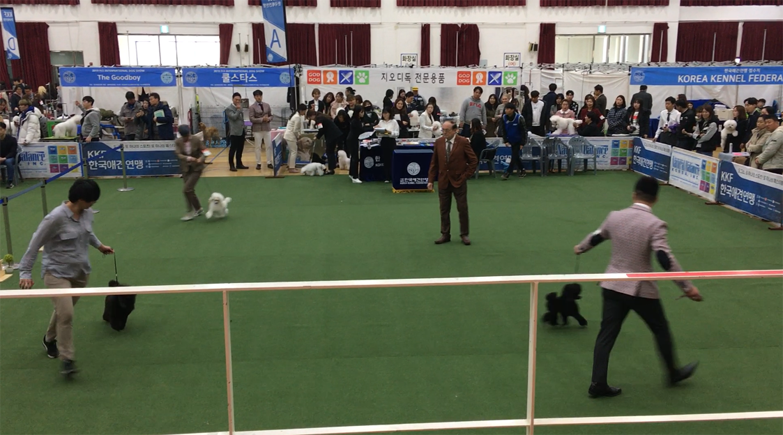 Anseong FCI(Federation Cynologique Internationale) International Dog Show