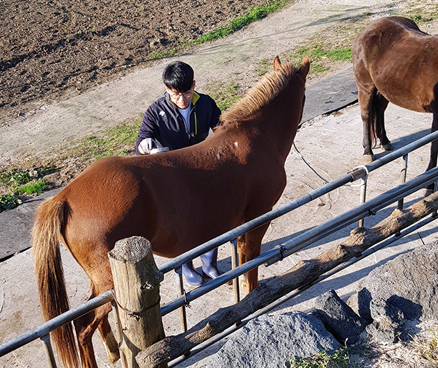 Forming a bond with horses